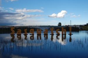 Sasquatch! Festival 2013