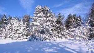 Blizzard-2010-Trees